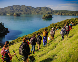Volunteer in bay of islands new zealand